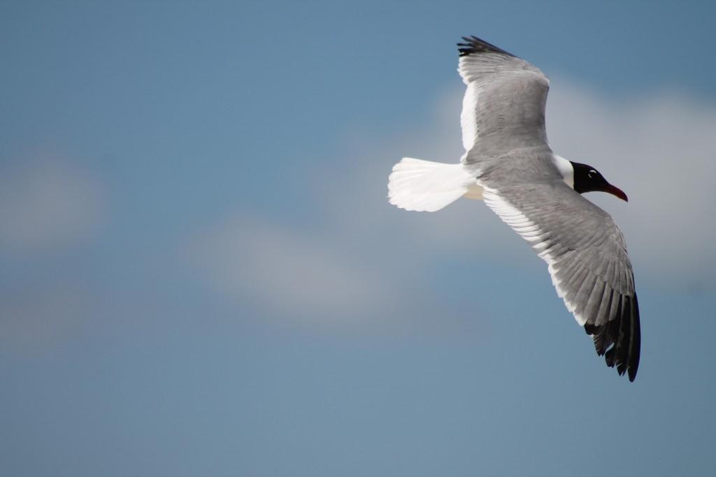 Sobre Passarinhos, humanos e seus ninhos